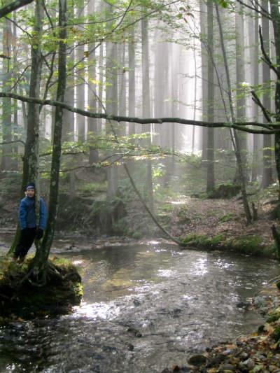 Daffnerwaldalmen